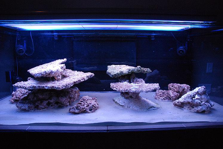 Stocking a 40 gallon breeder the reef tank for 10 gallon fish tank stocking ideas